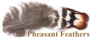 This is a body feather from the Reeves Pheasant rooster. We have them in our Feather Special packs.