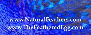 NaturalFeathers.com is TheFeatheredEgg.com