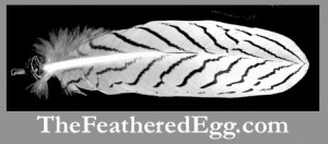 silver pheasant wing feathers at www.thefeatheredegg.com