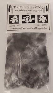 Cuckoo Maran Feathers
