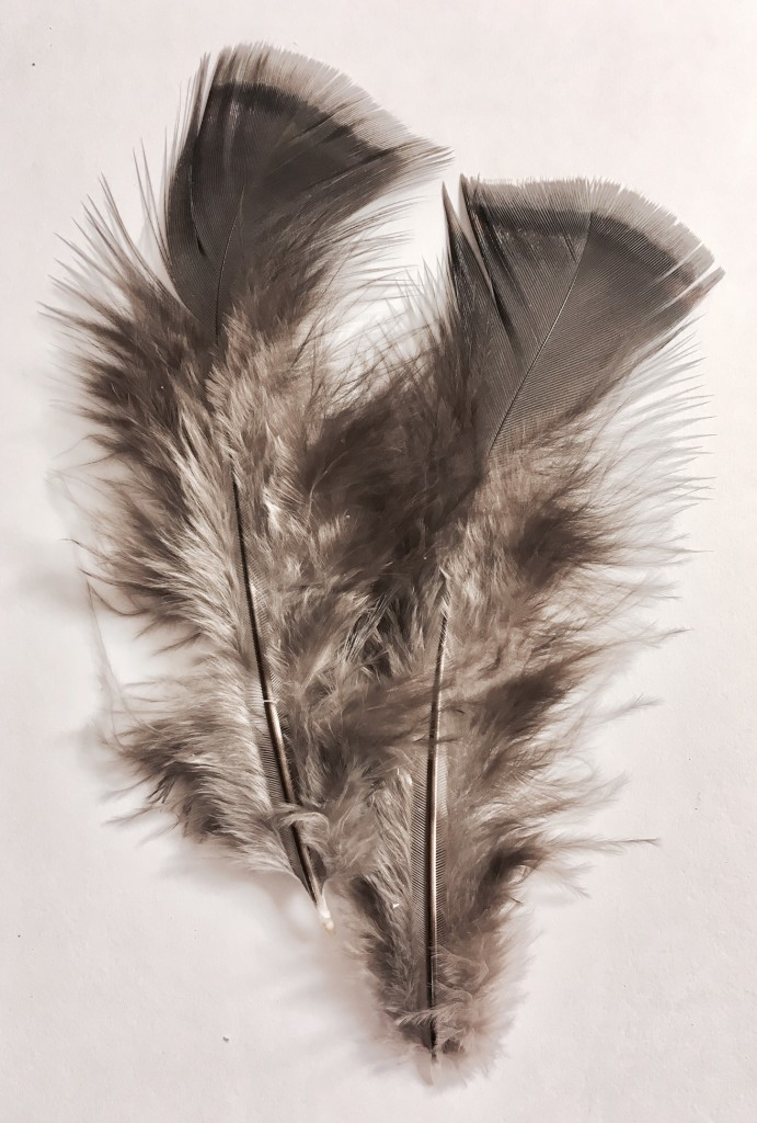 Turkey Body Feather